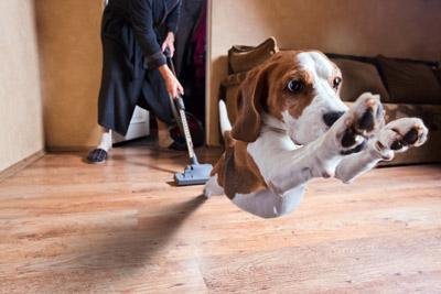 Dog scared of vacuum.